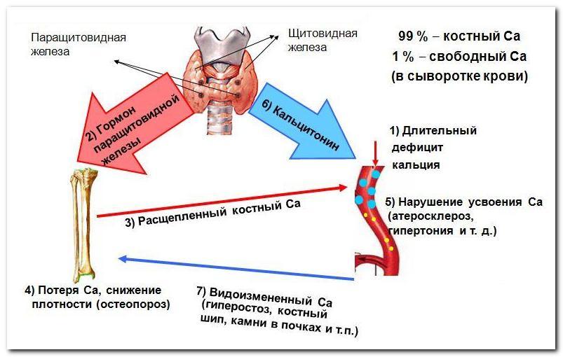 кальций д3 никомед при беременности