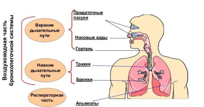 Воспаление верхних дыхательных путей и кашель