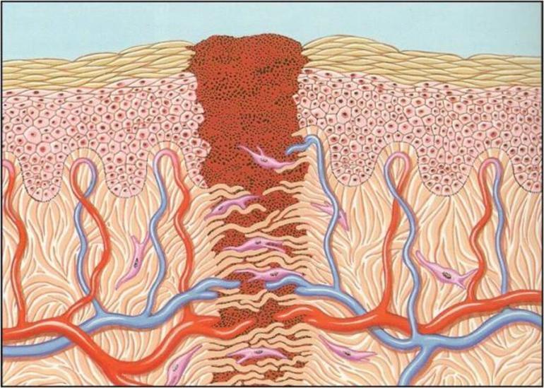 Ускоряет регенерацию поражённых тканей