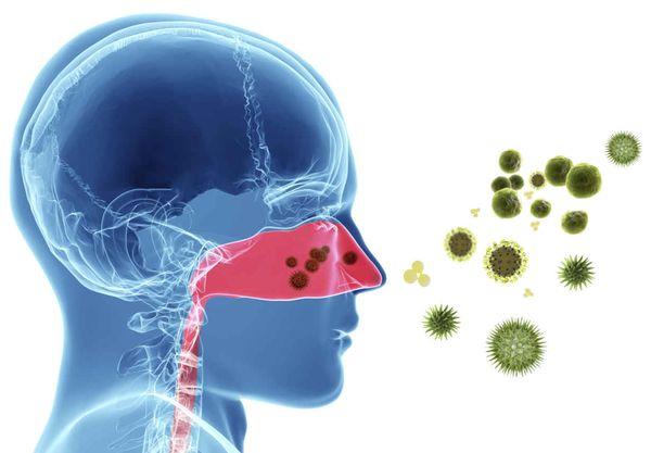 Аллерген проникает в человека