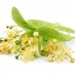 Цветы липы в составе монастырского чая